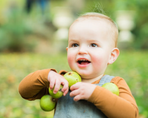 Ethan collecting apples, baby photographer Carlisle