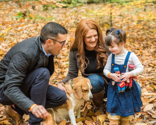 Family dog portraits, Cumbria